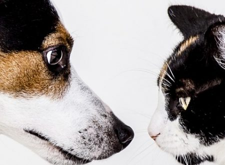 Chogan linea prodotti per animali