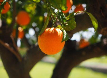 Usi dell'olio essenziale all'arancio